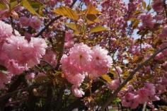 hello spring.